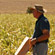 Read more about: New forage plant prepares farmers for climate changes