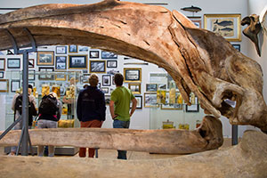 Whale skeleton - Photo: Birgitte Rubæk