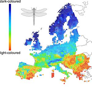 The mean colour lightness of dragonflies in Europe