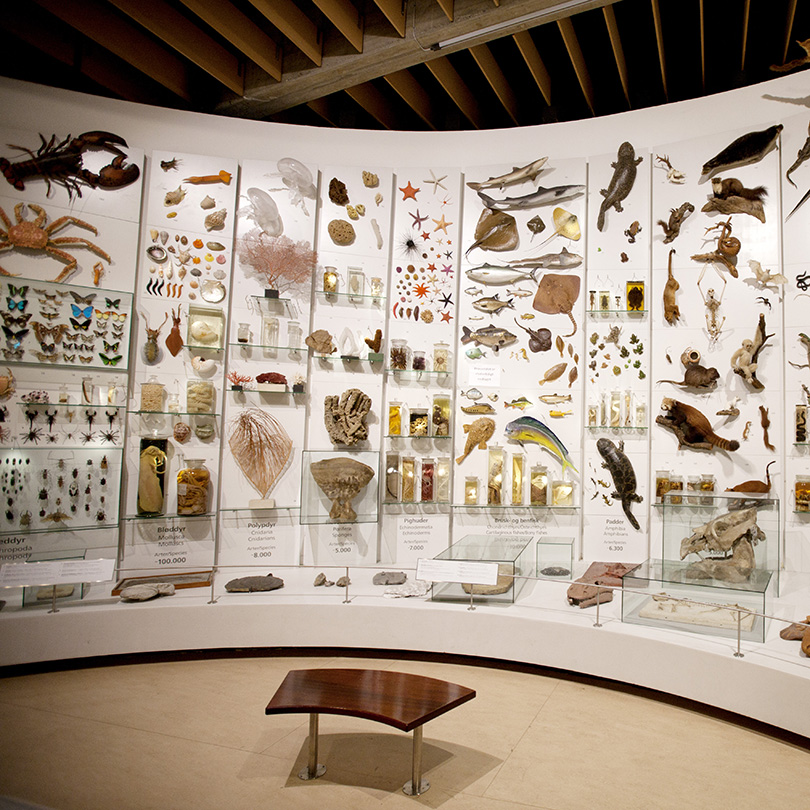 New organizational affiliation for Natural History Museum of Denmark
